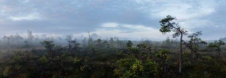 Panorama de un pantano con la refinería de petróleo fotos de archivo libres de regalías