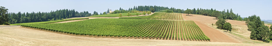 Panorama de un viñedo en el valle de Willamette Imagen de archivo libre de regalías