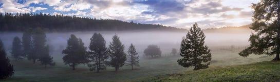 Panorama de una niebla de la mañana en un campo Imagen de archivo