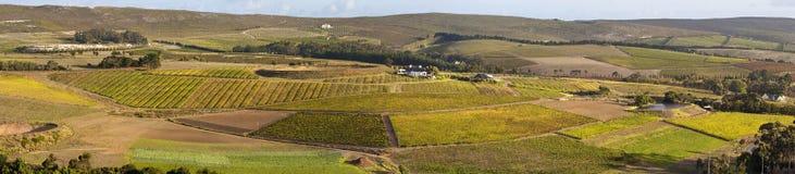 Panorama de vigne Images libres de droits