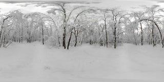 Panorama de 360 VR del bosque en la nieve en invierno Imagenes de archivo