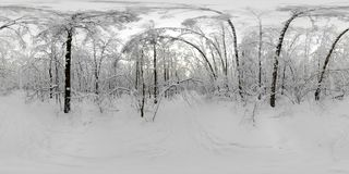 Panorama de 360 VR del bosque en la nieve en invierno Fotografía de archivo libre de regalías