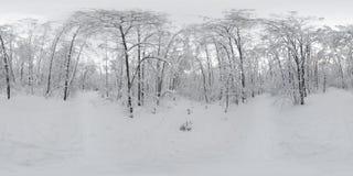 Panorama de 360 VR del bosque en la nieve en invierno Foto de archivo libre de regalías