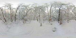 Panorama de 360 VR del bosque en la nieve en invierno Imagen de archivo