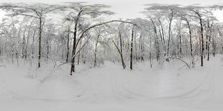 Panorama de 360 VR del bosque en la nieve en invierno Imagen de archivo libre de regalías