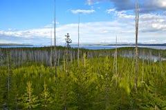 Panorama de Yellowstone Photo libre de droits