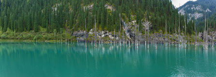 Panorama of dead trees in Lake Kaindy Royalty Free Stock Photography