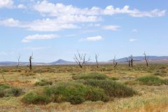Panorama of dead trees and mountains, Flinders Ranges, Australia. Panorama of a landscape with dead trees and mountains in Flinders Ranges National Park, South Royalty Free Stock Images