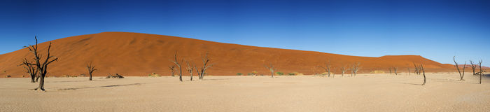 Panorama of the Dead Vlei Royalty Free Stock Photography