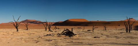 Panorama of the Dead Vlei Royalty Free Stock Images