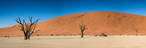 Panorama of the Dead Vlei Stock Images