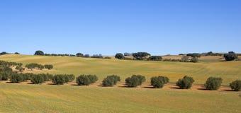 Panorama dei campi in Castiglia-La Mancha, Spagna. Immagini Stock
