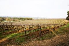 Panorama dei dolci e delle colline verdi molli con le vigne e il cypre immagine stock