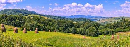 Panorama dei pendii verdi con i mucchi di fieno raccolti con gli alberi crescenti ed i picchi di montagna distanti con la menzogn Immagini Stock Libere da Diritti