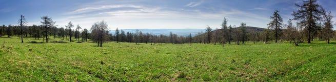 Panorama dei prati e degli alberi verdi fertili della molla immagini stock
