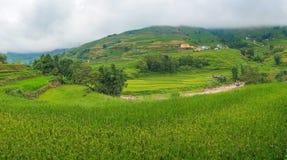 Panorama dei terrazzi del riso Backg rurale della natura del Vietnam dell'alta montagna Fotografia Stock Libera da Diritti