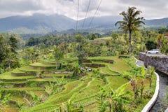 Panorama dei terrazzi del riso in Bali con le montagne nel fondo Fotografie Stock