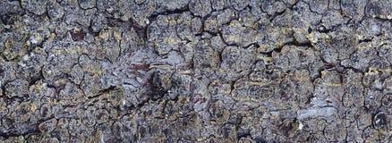 Panorama del árbol de corteza Fotografía de archivo libre de regalías