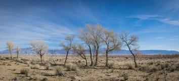 Panorama del árbol del desierto Foto de archivo