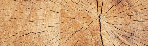 Panorama del árbol en una sección Imagen de archivo libre de regalías