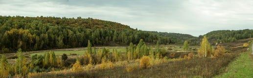 Panorama del bordo della foresta con la piantatura degli alberi giovani fotografie stock libere da diritti
