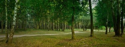 Panorama del bosque Fotos de archivo