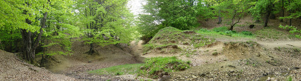 Panorama del bosque Foto de archivo libre de regalías