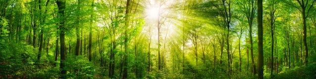 Panorama del bosque con rayos solares calientes
