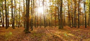 Panorama del bosque de hojas caducas en otoño imagen de archivo libre de regalías