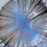 Panorama del bosque del invierno imagen de archivo libre de regalías