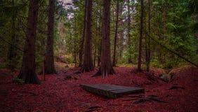 Panorama del bosque del otoño Foto de archivo libre de regalías