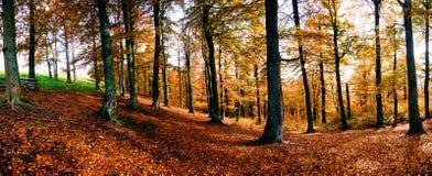 Panorama del bosque del otoño fotografía de archivo libre de regalías
