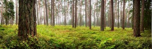 Panorama del bosque del parque nacional de Lahemaa imágenes de archivo libres de regalías