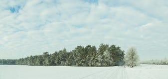 Panorama del bosque Frost del invierno en árboles Fotos de archivo