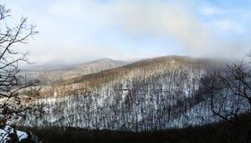 Panorama del bosque hermoso del invierno ocultado en niebla Foto de archivo