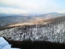 Panorama del bosque hermoso del invierno ocultado en niebla Fotos de archivo libres de regalías