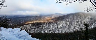 Panorama del bosque hermoso del invierno ocultado en niebla Imagen de archivo