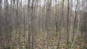 panorama del bosque joven del otoño