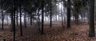 Panorama del bosque spruce Imagen de archivo