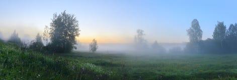 Panorama del césped de niebla con los árboles crecientes en un fondo del cielo de la salida del sol imagenes de archivo