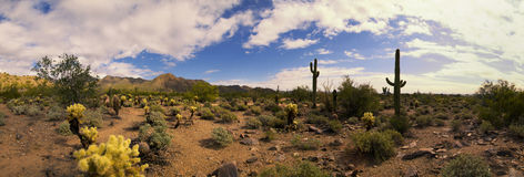 Panorama del cactus e delle montagne del deserto dell'Arizona Fotografie Stock Libere da Diritti
