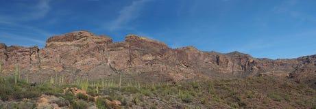 Panorama del cactus e delle montagne vulcaniche in cactus N della canna d'organo fotografie stock