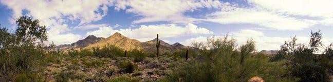 Panorama del cactus y de las montañas del desierto Imagenes de archivo