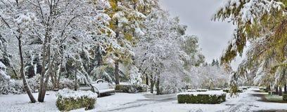 Panorama del callejón del parque de la ciudad después de las primeras nevadas Fotografía de archivo libre de regalías