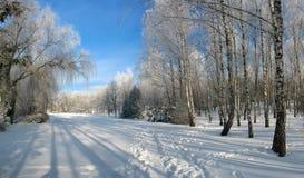 Panorama del callejón del parque del invierno Imagen de archivo