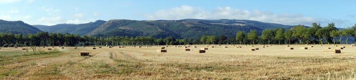 Panorama del campo Fotografie Stock