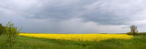 Panorama del campo amarillo con la tormenta del resorte Imágenes de archivo libres de regalías