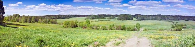 Panorama del campo con i denti di leone Fotografie Stock