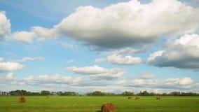 Panorama del campo con i mucchi di fieno vicino alla foresta sotto cielo blu con le nuvole bianche al rallentatore 1920x1080 video d archivio