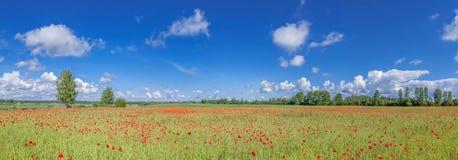 Panorama del campo con i papaveri Fotografia Stock